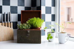 Plants Add To Indoor Air Quality